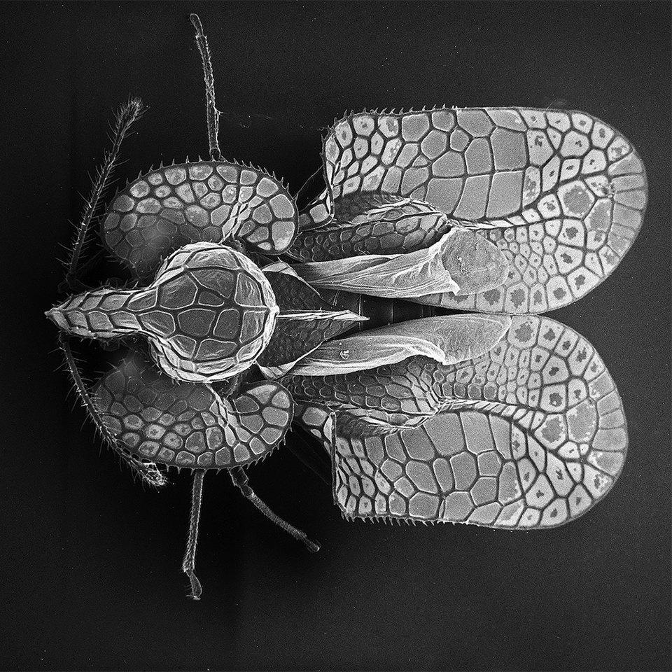 Как насекомые выглядят под микроскопом:  9 высокоточных изображений. Изображение № 1.