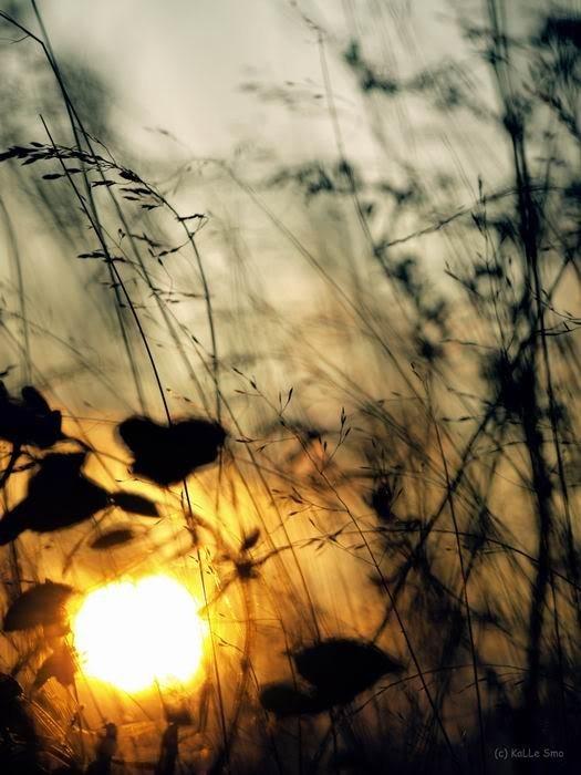 Фотограф Андрей Пушкин. Изображение № 7.