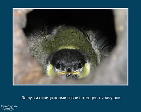 Животные иинтересные факты оних. Изображение № 18.