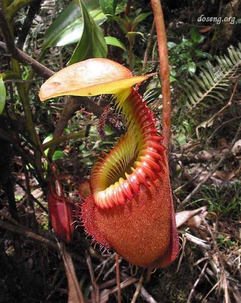Необычные растения. Изображение № 10.