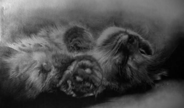 Paullung.и его коты. Изображение № 3.