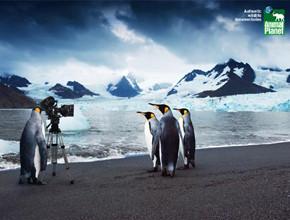 В мире животных: Герои «Мадагаскара» в мемах, рекламе и видеороликах. Изображение № 54.