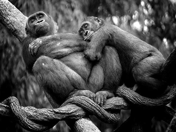 Лучшие снимки от National Geographic (золотой фонд). Изображение № 24.