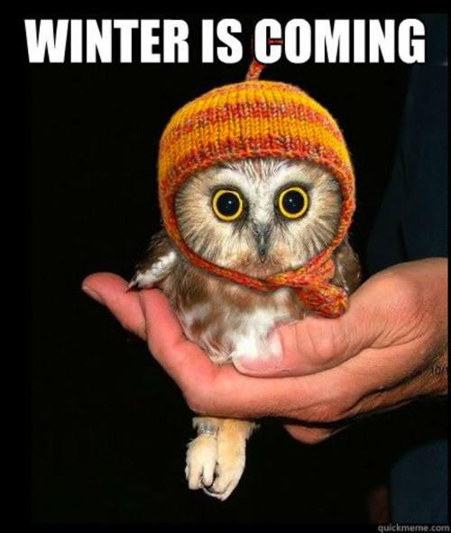 Зима близко: Главные мемы из «Игры престолов». Изображение № 8.