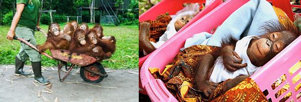 Лоун Дрошер-Нилсен и её обезьянки. Изображение № 4.
