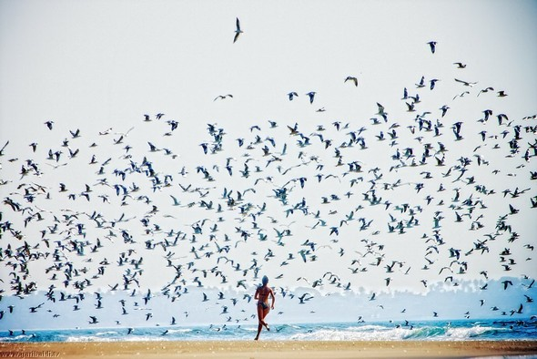 Пронзаясь махом крыльев - non stop. Изображение № 31.