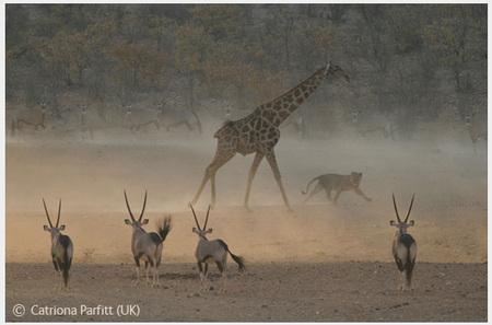 Победители Wildlife Photographer 2008. Изображение № 2.