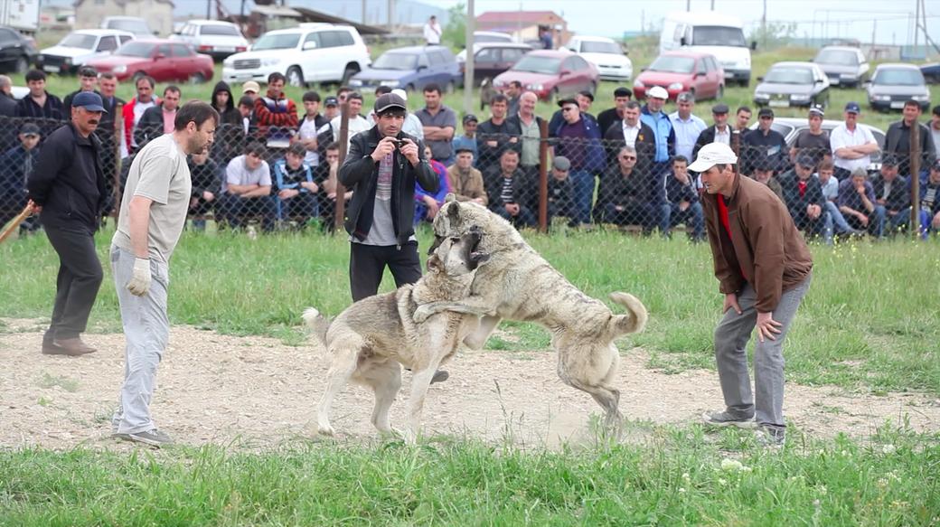 Позволь мне быть частью нарратива трех экранная видео инсталляция/ Дагестан, 2012 . Изображение № 7.
