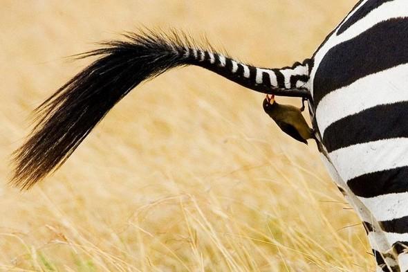 Лучшие новые снимки от National Geographic. Изображение № 47.