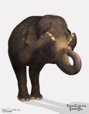 Какспрятать слона. Изображение № 36.