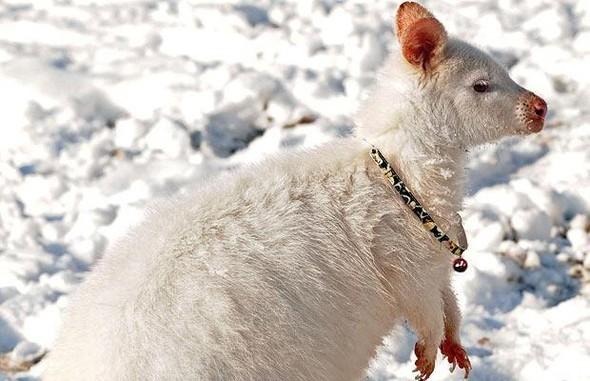 Животные-альбиносы. Изображение № 28.