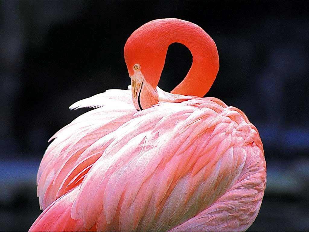 Розовый фламинго. Изображение №40.