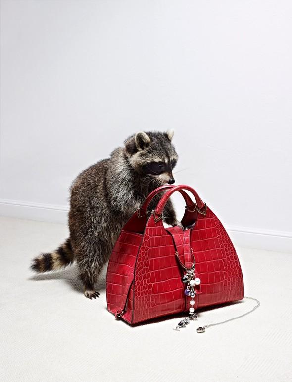 Съёмка: Животные в Viva! Moda. Изображение № 5.