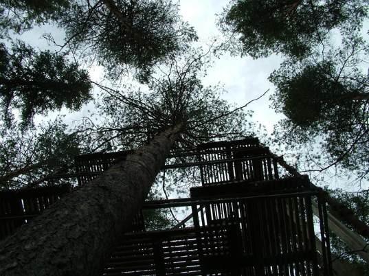 Treehotel. Изображение № 16.