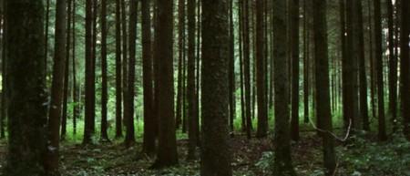 Невинность Innocence (Люсиль Хадзихалилович, 2004). Изображение № 1.