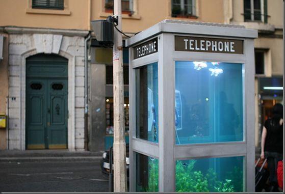 Аквариум втелефонной будке. Изображение № 1.