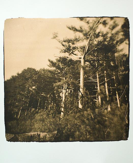Изображение 12. Polaroidman Алексей Курбатов.. Изображение № 11.