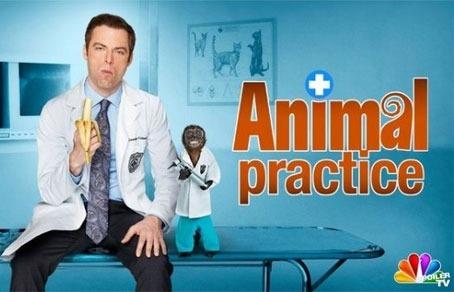 Лучшие новые телевизионные шоу Америки сезона осень 2012- зима 2013 . Изображение № 8.
