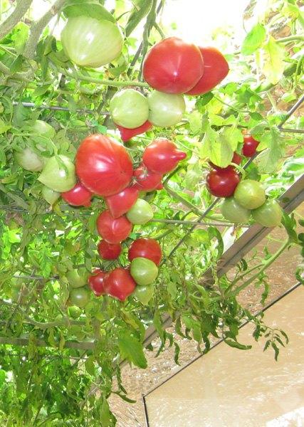 Фото: konodesigns.com. Изображение № 10.