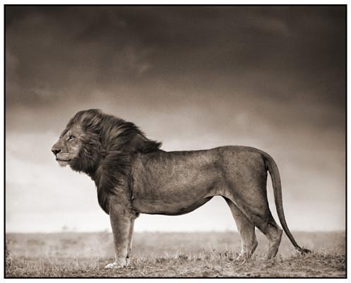 МояАфрика. Изображение № 17.