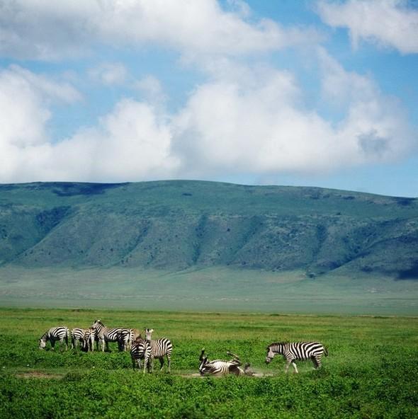 Танзания. Кратер Нгоронгоро. Изображение № 4.