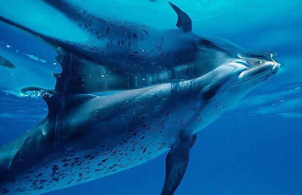 Зачем композиторы учат код и поют для дельфинов. Изображение № 7.