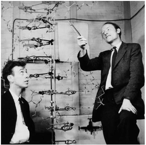Джеймс Уотсон и Френсис Крик (предложившие структуру двойной спирали ДНК)  у модели ДНК, 1953 год. Изображение № 35.
