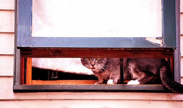 Cat. Window. Изображение № 20.