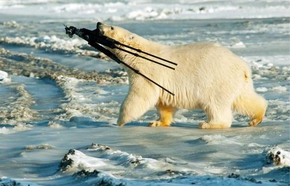Лучшие новые снимки от National Geographic. Изображение № 34.