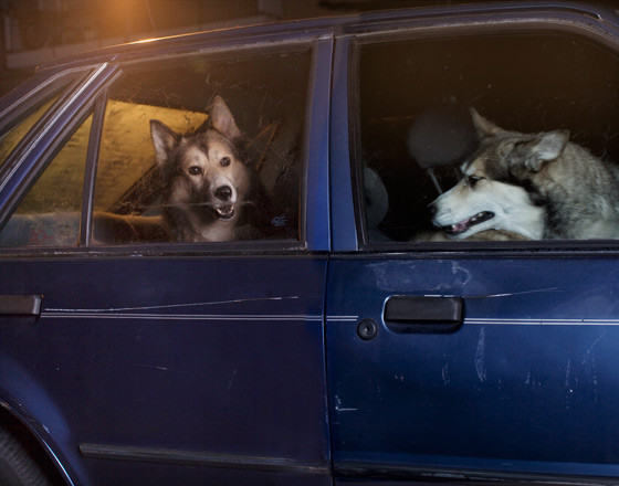 The silence of dogs in cars. Изображение № 10.