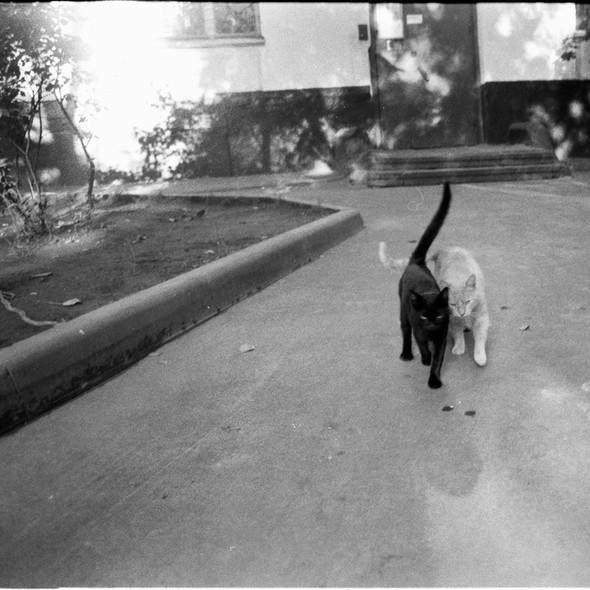 Блудливые коты. Изображение № 10.