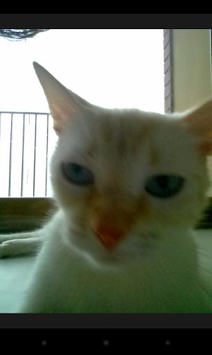 Фотоприложение Snapcat позволяет котам снимать себя на телефон. Изображение № 2.