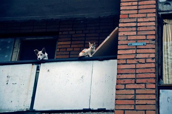 Из мира животных. Фотограф: Анжела Шахназарян. Изображение № 7.