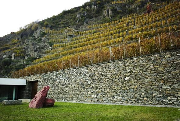 Горный виноград Nebbiolo. Изображение № 2.