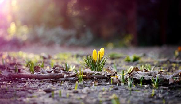 Весна идет! Создаем весеннее настроение. Изображение № 20.