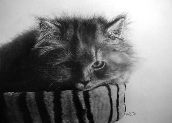 Кошки, люди, карандаш. Paul Lung. Изображение № 12.