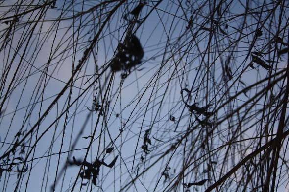 Голые ветви. Изображение № 4.