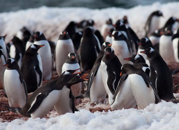 Изображение 1. Антарктида: суровая красота.. Изображение № 1.