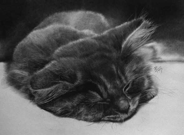 Кошки, люди, карандаш. Paul Lung. Изображение № 7.