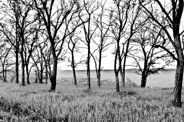 Черно-белые путешествия. Изображение № 29.