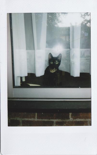 Cat. Window. Изображение № 44.