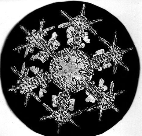 Уилсон Бентли иего снежинки. Изображение № 1.