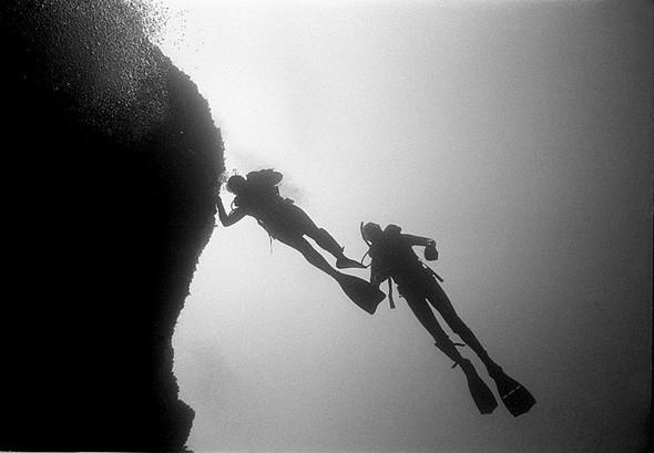 Подводная жизнь глазами фотографа Карлоса Франко. Изображение № 16.