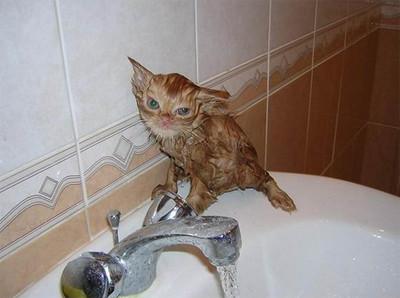 50 животных, которые ненавидят мыться. Изображение № 18.