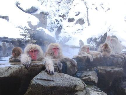 И даже обезьянам нужен отдых. Изображение № 2.