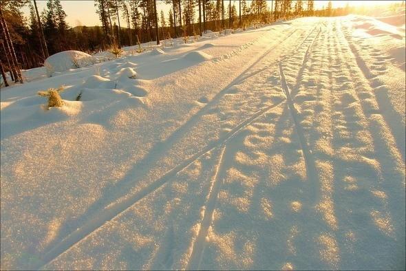Изображение 23. Выходные в шведском лесу.. Изображение № 23.
