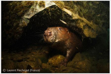 Победители Wildlife Photographer 2008. Изображение № 29.