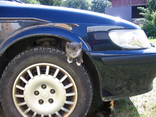 Котики и авто. Изображение № 11.