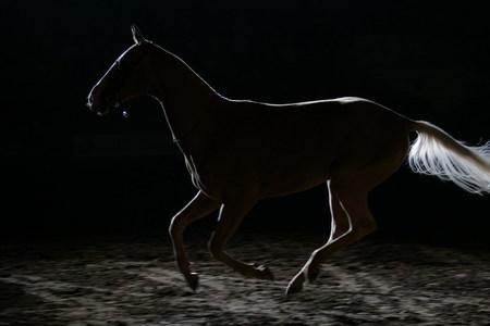 BARTABAS «Я быубрал всемашины изаменил ихлошадьми». Изображение № 1.