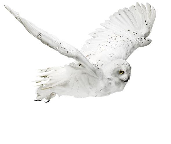 Божественные птицы Andrew Zuckerman. Изображение № 1.
